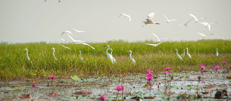 best-time-to-visit-chilika
