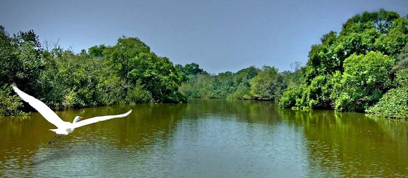 bhitarkanika-national-park