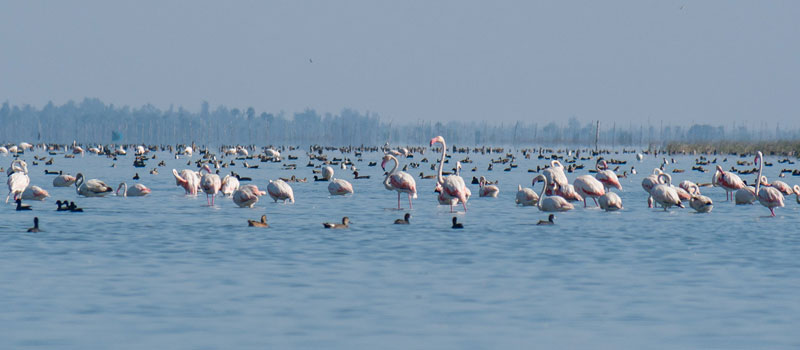 chilka-lake-bird-sanctuary