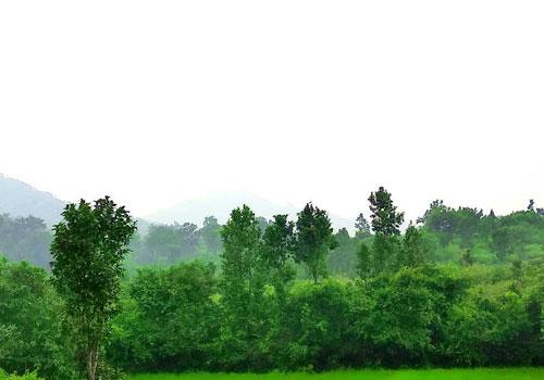 nature-tours-in-odisha