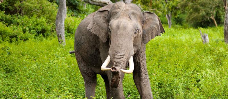 odisha-simlipal-national-park