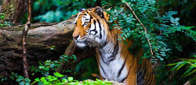 satkosia-tiger-reserve-in-odisha