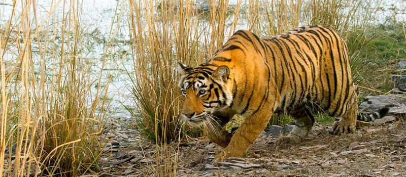 satkosia-tiger-reserve-odisha
