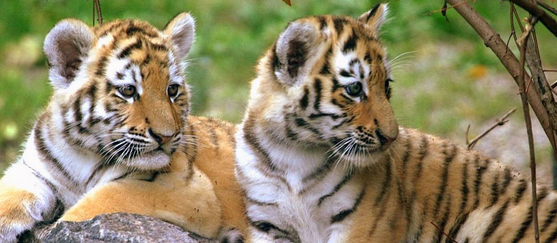 wildlife-tour-packages-in-odisha